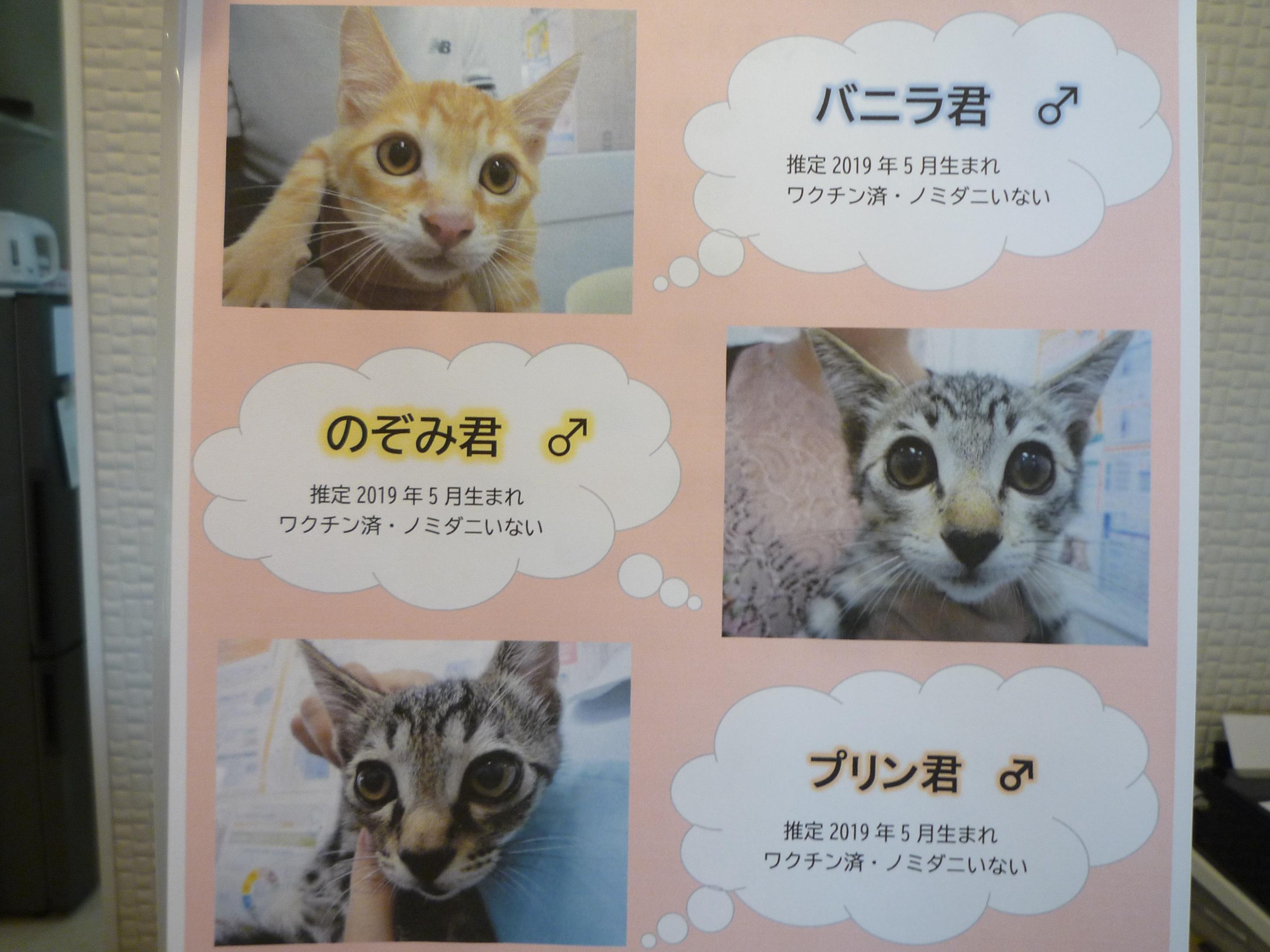 かがみ動物病院ブログ   かがみ動物病院(佐賀県唐津市鏡)