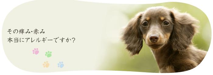 アレルギー 治る 動物 愛犬クーピーのアレルギー奮闘記。ドッグフードでアレルギーが治る!